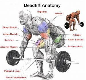 How to Fix Lower Back Pain When Performing Rows and Deadlifts
